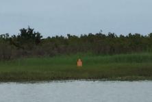 Target Practice Camp Lejeune