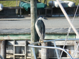 Bird on neighboring boat
