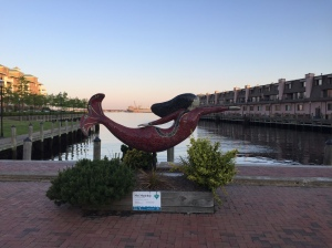 Mermaids are everywhere Norfolk, VA