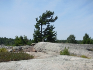 Rocks & pine tree near Burnt Island anchorage