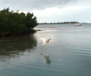 Egret in Sunset Marina