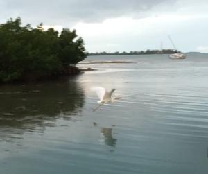 Egret in Sunset Marina