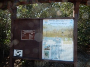 Blue Hole observation - Big Pine Key