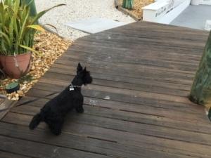 Dori the iguana attacker