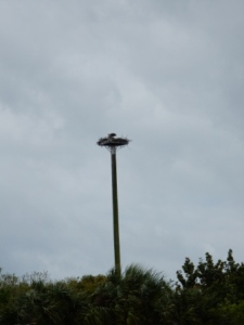 Osprey's home near Jupiter