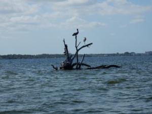 Birds near Serenity Island