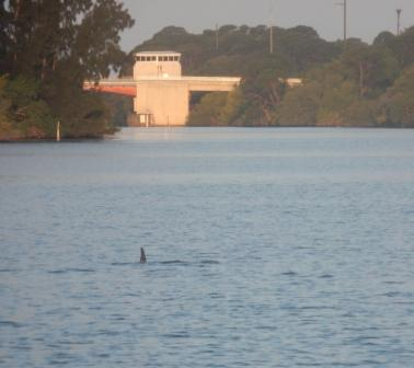 Dolphins always there to see us off