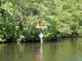 Bird nestings on the Waccamaw River