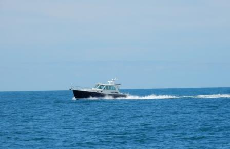 Seabird Offshore NC coast