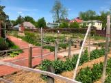 Vegetable Gardens at Tryon Palace