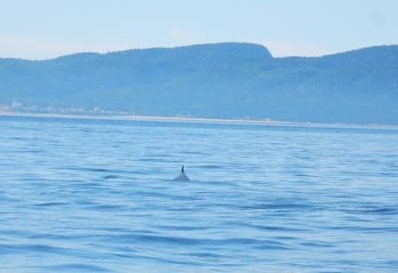 Whale in water near Saguenay entrance
