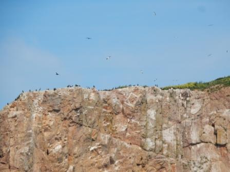 Birds on Percé Rock